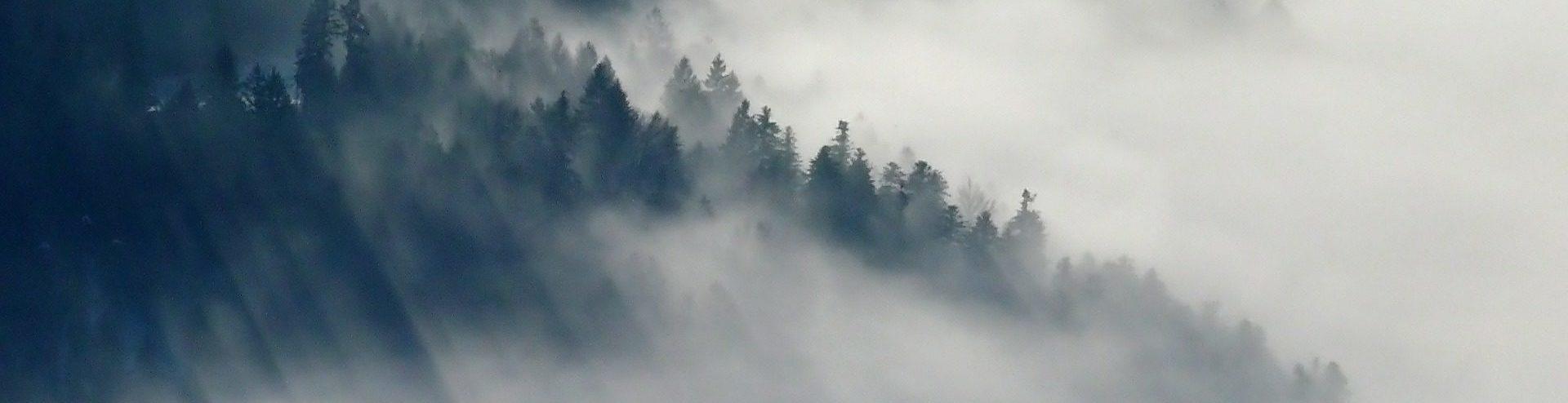 Wald, Bäume, Holz